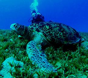Cousin´s rock Galapagos diving Aqua yacht