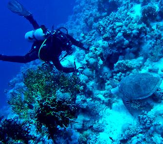 aqua diving galapagos islands experience