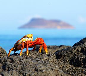 Egas Port Galapagos Aqua Yacht crab