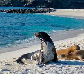 Sea lion mosquera islands Aqua yacht