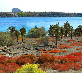 South Palza Galapagos Islands