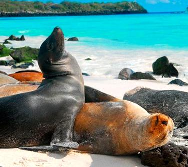 sea lion galapagos islands unique