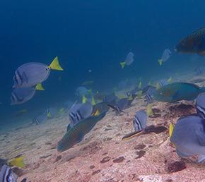 Wolf Galapagos Islands diving Aqua yacht