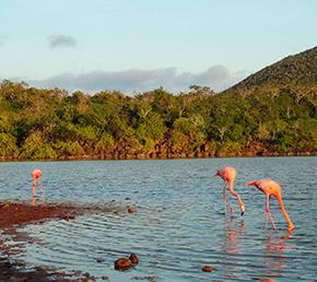 Cormorant Point galapagos islands safe travels Ecuador ATC Cruises Aqua Yacht naturalist itineraries