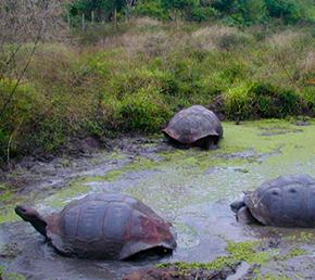 El Chato Reserve galapagos islands safe travels Ecuador ATC Cruises Aqua Yacht naturalist itineraries