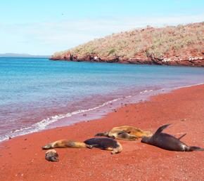 Rabida galapagos islands safe travels Ecuador ATC Cruises Aqua Yacht naturalist itineraries